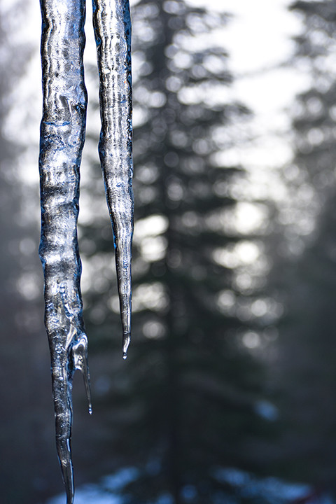 double icicle tree