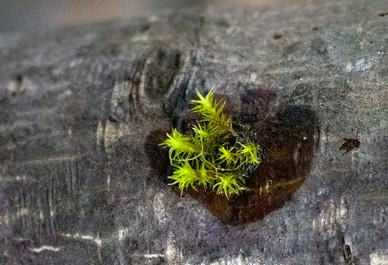 DSC_0230 little green guy trunk web.jpg