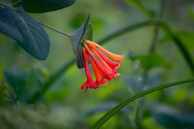DSC_1097 orange forest flower web.jpg