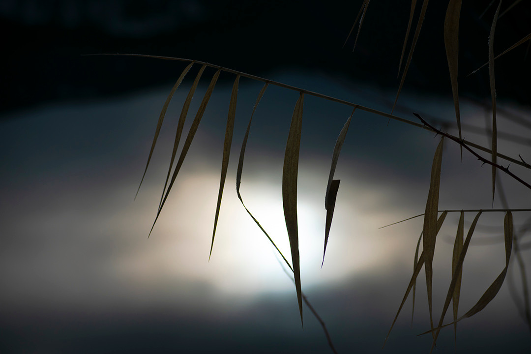 DSC_0420 ghostly grass.jpg