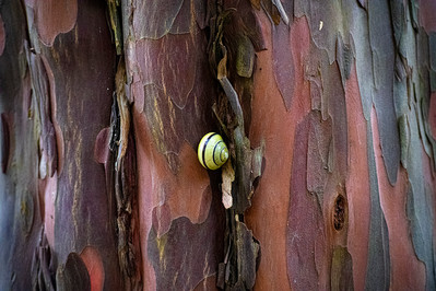 DSC_0112 snail on yew web.jpg
