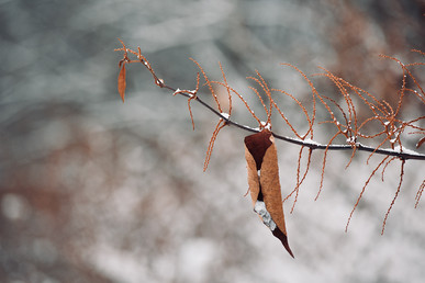 DSC_0667 snowy invasive orange web.jpg