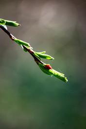 DSC_0673 ladybug branch web.jpg