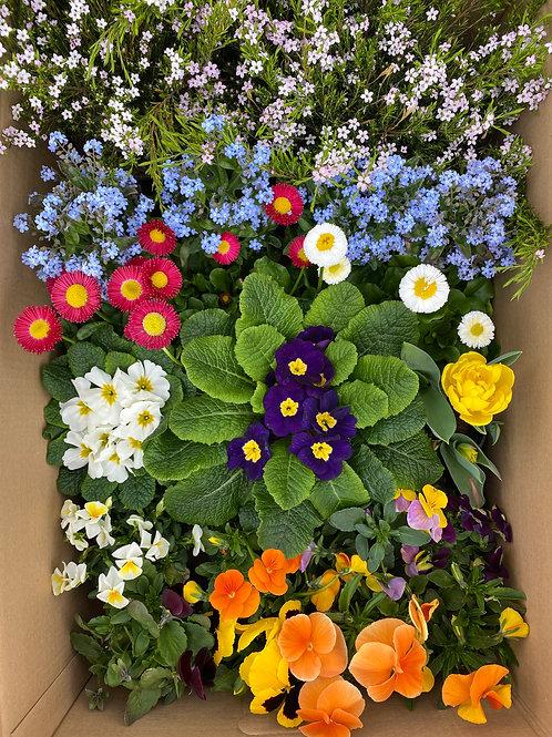 Frühlingsbox groß