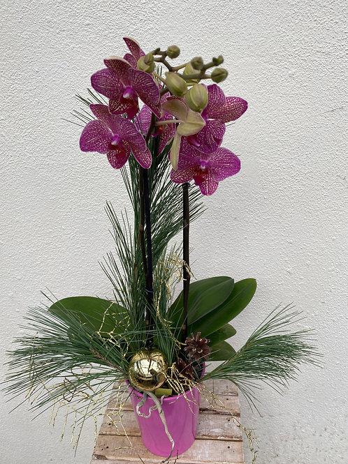 Orchidee ausdekoriert