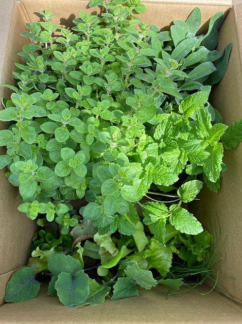Kräuter & Salatpflanzenbox