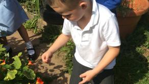 Mrs Miller's Class in the Garden