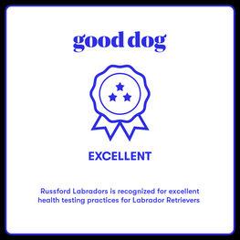 GOOD DOG.jpg