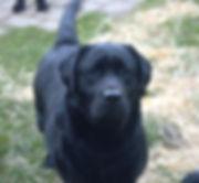 dogs 4-27-2020 756.jpg