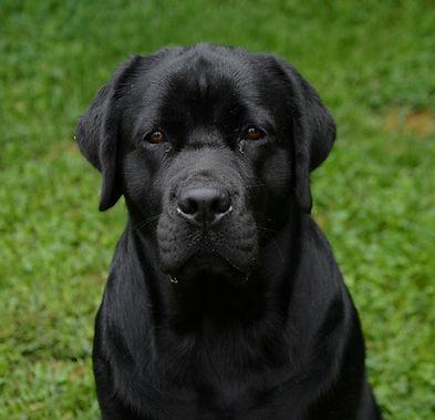 dogs 9-10-18 022.jpg