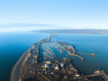 Iconic Homer Spit