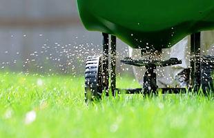 Fertilizing a green lawn