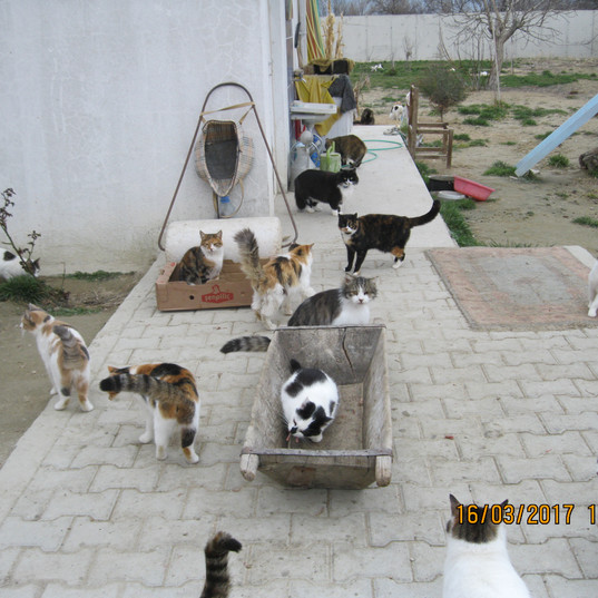 Katzen.jpg