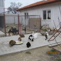 Katzen2.JPG