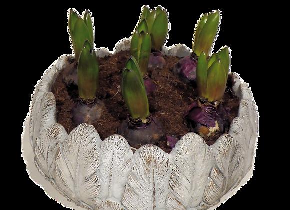 Something toTreasure planted arrangement
