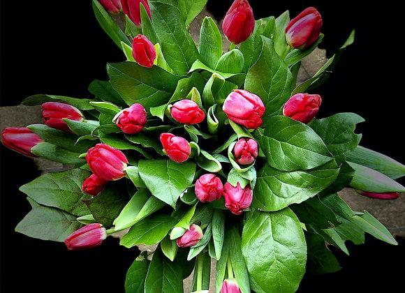 Tulips Meet hand tied bouquet