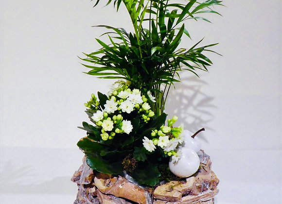'Here I Stand' plant arrangement