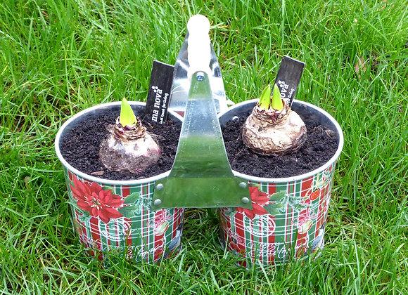 Tartan Hyacinth Planter