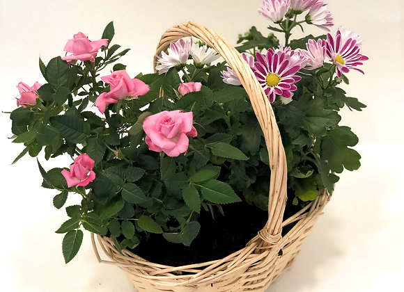 Smashing Pink planted arrangement