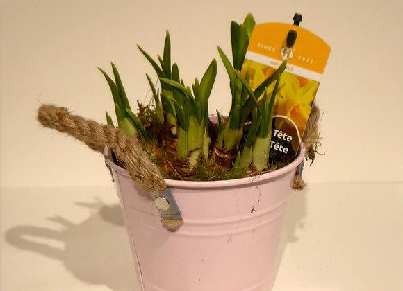 Spring Bucket Plant