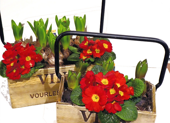 Double Pleasure Plant