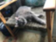 cat laying down. cat napping. atlanta cat.