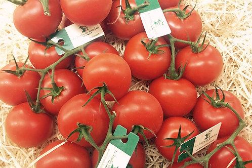 Tomate Rabelais