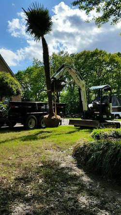 Palm Tree Install