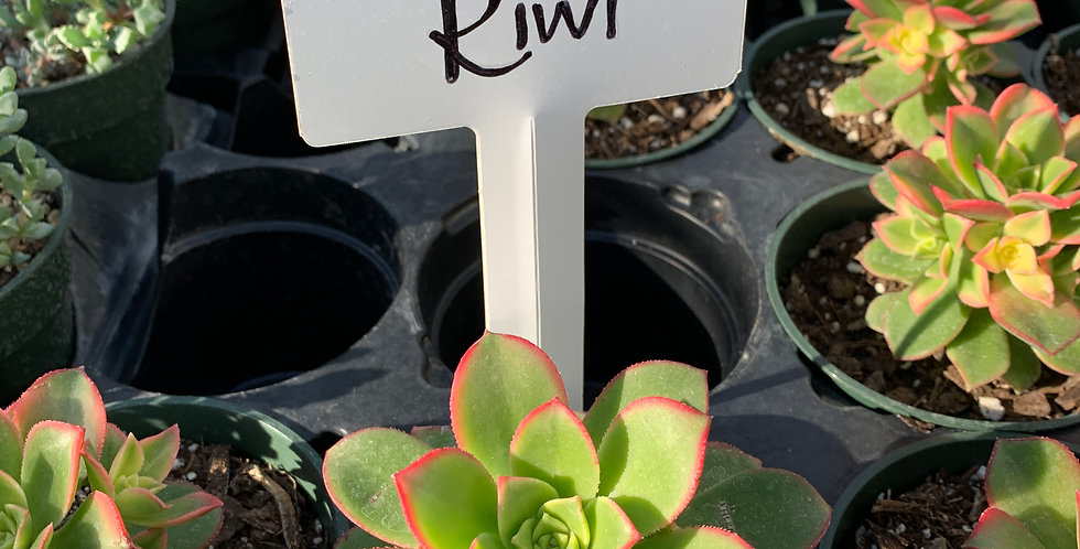 Single Succulents
