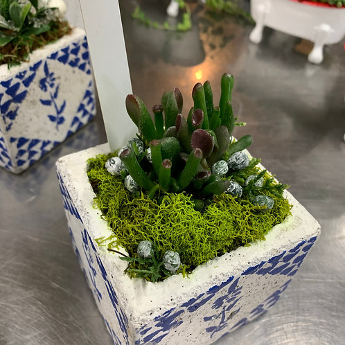 Winter Succulents