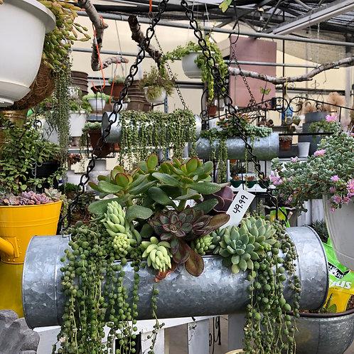 Mixed Succulents in Metal Art Hanger