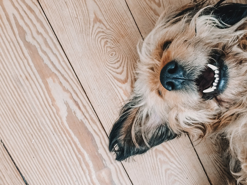 Positive Dog Training in Tacoma, WA