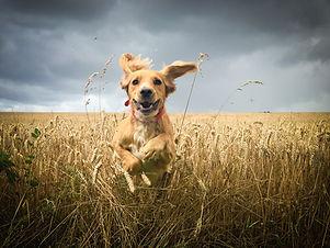 Dog Trainer Tacoma WA