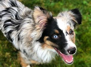 Dog Walker Tacoma WA