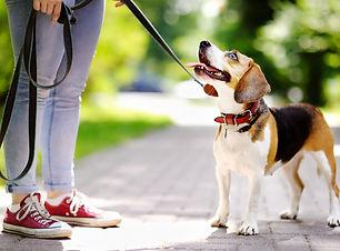 How To Train My Dog