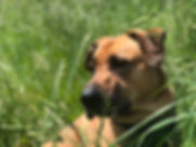 Dog Trainig Class
