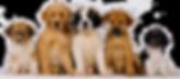 perroscachorros-de-perro.png