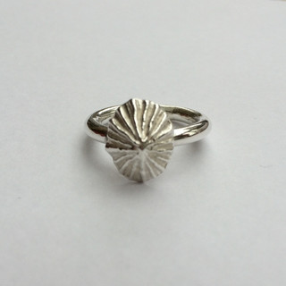 Limpet shell ring