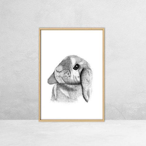 Poster Langoor konijn (A5)