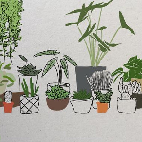 Kaartje Planten Joeff