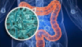 microbiota%20intestinale_edited.jpg