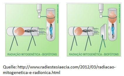 Mitogenetische Strahlung.jpg