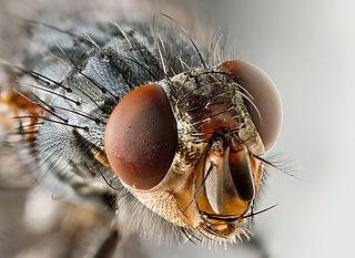 Fliegen-Portrait.jpg