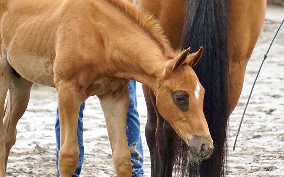 Foals Background.jpg