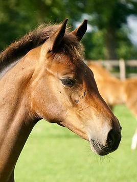 Foals 2020.jpg