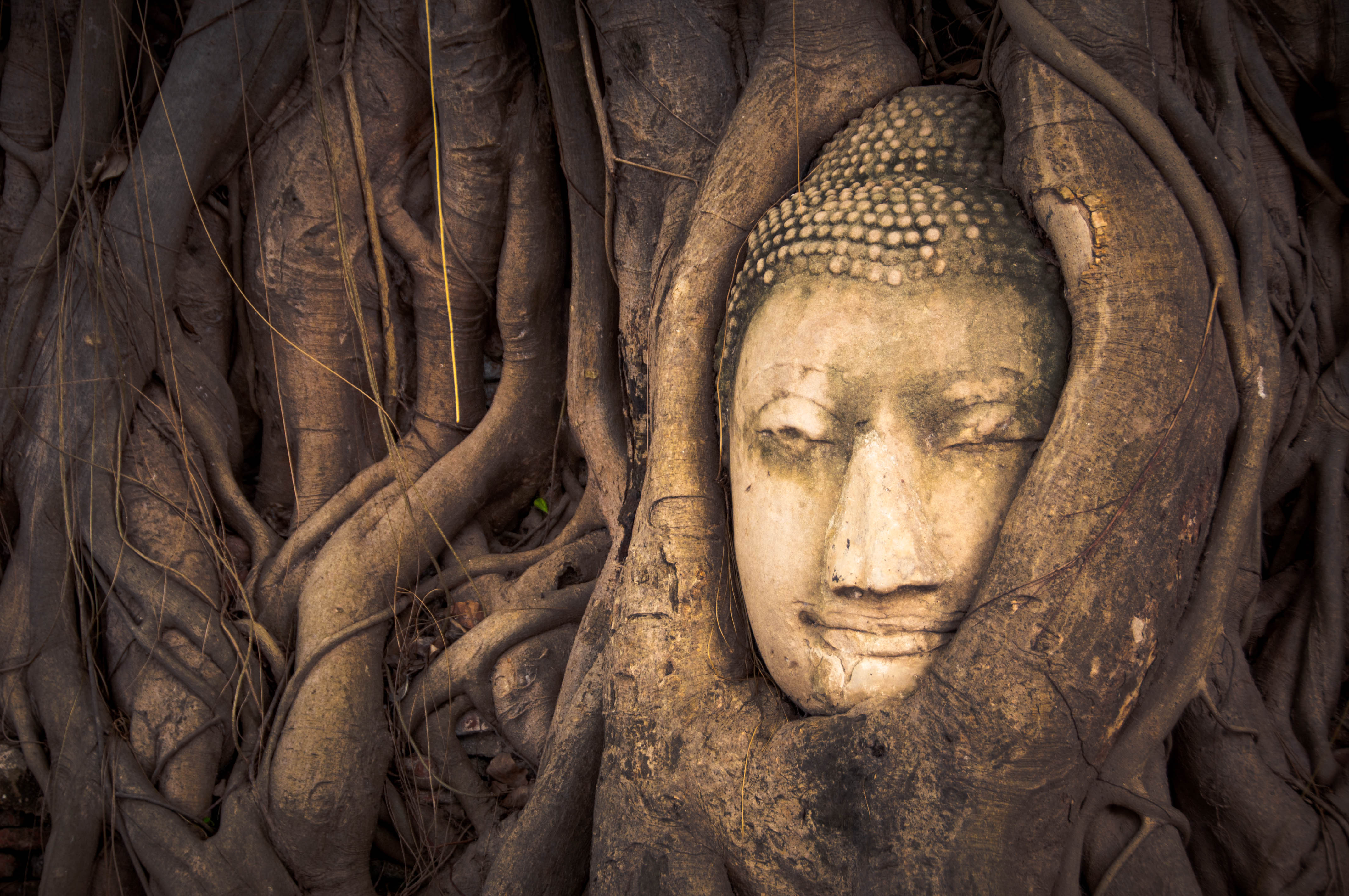 Samanta Aretino_Budismo de raíz.jpg