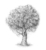 10-drawing-tree-completing-the-sketch.jp
