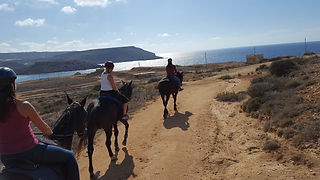 Things to do in Malta | Horse Riding