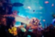 Things to do in Malta | Bird Park & Aquarium