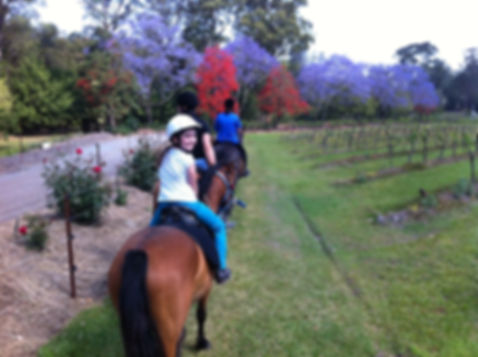 Pony rides Port Macquarie